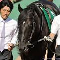 Photos: [140615東京11RエプソムC]?トーセンジャガー[青]「ナンバーちゃんかわいいなぁ、漆黒の馬体に惚れてくれたりしないんだろうか」