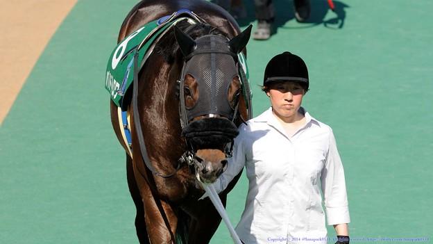 Photos: [140615東京11RエプソムC]?パドトロワ[鹿]「59kg…解せぬ…」