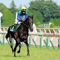 Photos: [140615東京11RエプソムC]トーセンジャガー(武士沢)「ブッシーには漆黒のこの馬体がよく似合うわ」