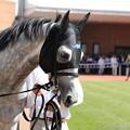 Photos: [140622函館11R函館SS]クリーンエコロジー「おいおいお嬢さん、ぼくは誘導馬じゃないんですよ」