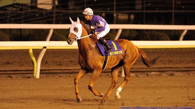 [140625大井12R帝王賞]最後の返し馬になってしまったオオエライジン…。苦しい思いさせてしまってごめんなさい。一生忘れないから、どうかゆっくり休んでください。 #tck2014