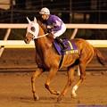 Photos: [140625大井12R帝王賞]最後の返し馬になってしまったオオエライジン…。苦しい思いさせてしまってごめんなさい。一生忘れないから、どうかゆっくり休んでください。 #tck2014