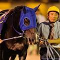 Photos: [140625大井12R帝王賞](3)キスミープリンス[浦和]「強いのばっかりだねえ…」