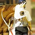 Photos: [140625大井12R帝王賞](1)オオエライジン[兵庫]「今回は下原さんもちゃんと着いたし、あとは胸を借りるつもりで走るだけですよ」 #chihokeiba