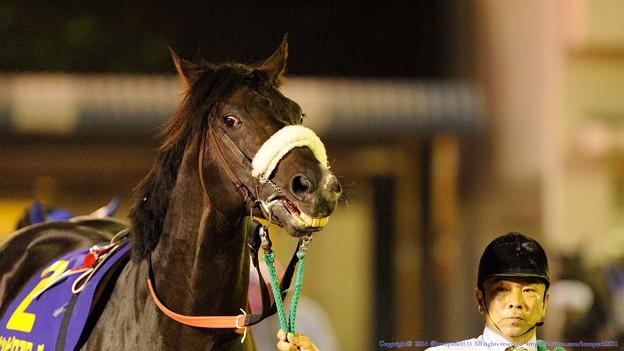[140625大井12R帝王賞]ニホンピロアワーズ「あああ~こっちもやったるわい~」ってすごいお顔 #ジロリ馬