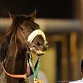 Photos: [140625大井12R帝王賞]ニホンピロアワーズ「あああ~こっちもやったるわい~」ってすごいお顔 #ジロリ馬
