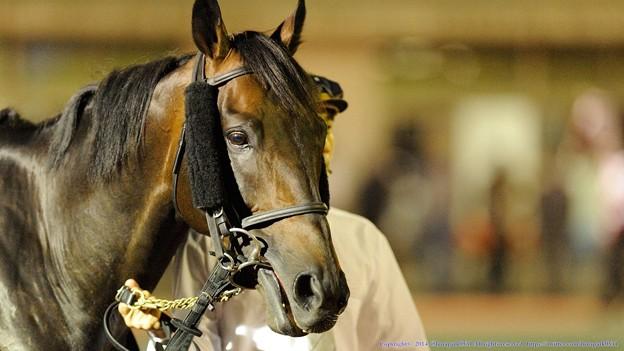 [140625大井12R帝王賞]馬券オヤジ「ソリキンは馬場渋ったらなにかやらかすかもしれんよな~」ソリタリーキング「はっ!おやっさん、わかってらっしゃるぅ~」