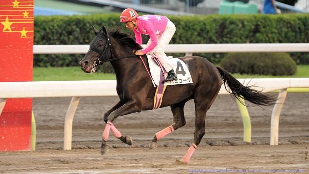 [140625大井10Rりゅう座特]バミューダ&ピンク「今度ピンクさんが乗るときはピンクのメンコ用意してもらおう」