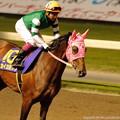 Photos: [140702川崎11RスパーキングレディーC]カイカヨソウ「誘導馬ちゃんたち今日もかわいいわね」