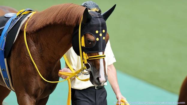 Photos: [140629東京11RパラダイスS]タイキパーシヴァル「じとーっ…」 #ジロリ馬