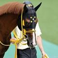 [140629東京11RパラダイスS]タイキパーシヴァル「じとーっ…」 #ジロリ馬