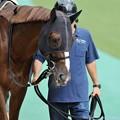 Photos: [140629東京11RパラダイスS]シャイニーホーク「パーシヴァルの視線が怖い」