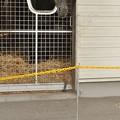 Photos: [110821アローS]トーホウエンペラー「ネコは器用だなぁ」