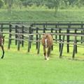 [100824畠山牧場]向かいの放牧場の母ちゃんにルナちゃんの面影をみてしまった…(もちろん、別馬です)