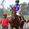 Photos: [140727中京5R新馬]ウリボー&中井「少しは馬らしく見えてきたかな?」