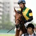 Photos: [140727中京5R新馬]カゼノゴトク&柴山「あの芝食べられるの!?」厩務員さん・柴山「ダーメです」