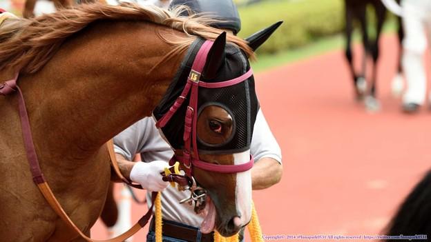[140727中京5R新馬]?パンプキンパイ「美味しそう美味しそうってそこの人怖いこといわないで」 #ジロリ馬