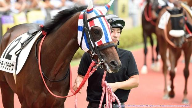 [140727中京5R新馬]?ヒデノプラチナ「他のお馬さんもみんなテンション高いね~」