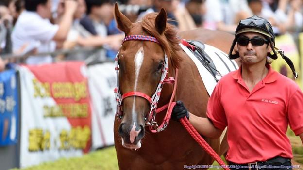[140727中京5R新馬]?ウリボー「ぼく、馬なんだよ…イノシシじゃないんだよ…」