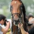 Photos: [140727中京5R新馬]ロンバルディア「なんか、祝福されてるね~」