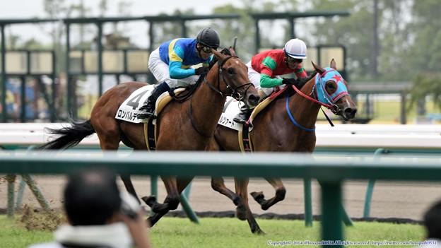 [140727中京5R新馬]100m、ラッフォルツァートに並びかけるロンバルディア