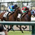Photos: [140727中京5R新馬]100m、ラッフォルツァートに並びかけるロンバルディア