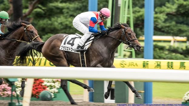 [140817新潟6R]人気薄で新馬戦を勝ったグラスエトワール&木幡広 #keiba