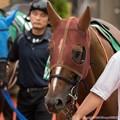 Photos: [140817新潟11R関屋記念]クラレント「どうせ馬場もぐっちゃぐちゃだしね~気楽に走り…ってかプリンスくん見すぎでしょ」