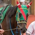 Photos: [140817新潟11R関屋記念]?マジェスティハーツ「今日こそは一馬くんを男にしてあげたいんだけどこの馬場じゃね・・・ねえ?」厩務員さん「う、うん…」