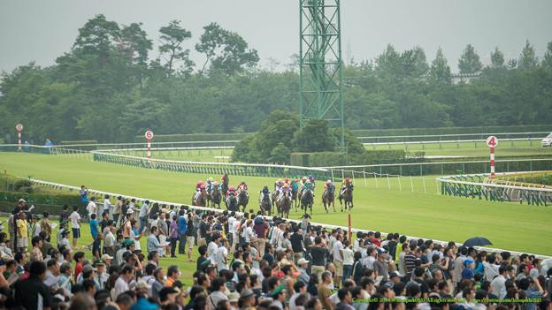[140816新潟7R]400m、ほとんど外を選んでる。馬群はまだ密集