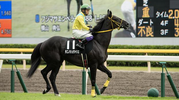 [140816新潟10R弥彦特別]タニノシュヴァリエ(江田照)「エダテルさん、結構、この馬場気持ち悪いんすけど」