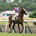 Photos: [140817新潟5R]ブラウンシップ(西田)「前のお兄さんたちについていけば…」西田「それは誘導馬じゃな…いけどまあいいか」