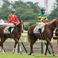 Photos: [140817新潟5R]トウケイファルコン(宮崎)「ぼくらも誘導馬になれるのかなぁ」サンダークラウド「てか見ようによってはぼくらが誘導馬にみえるかもしれないよ」→
