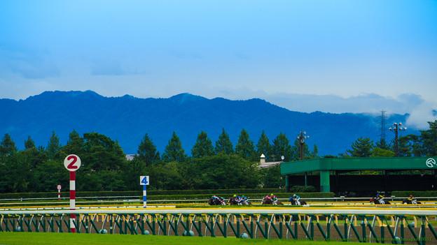 [140817新潟6R]午後に入って雨が止んできた。一生懸命ダートを走る新馬たち