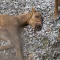 Photos: イジーの仔っこ「むにゃむにゃzzz」【140908NHP】