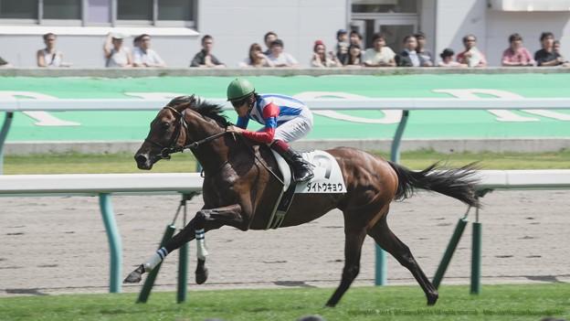 100m、ダイトウキョウがセーフティーリード【140906札幌5R2歳新馬】