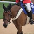 Photos: ビューテンプ「だってホントにやる気なさそうだもの~」【140906札幌5R2歳新馬】