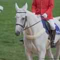 Photos: ベイズウォーター「スケさんの目にはそんなにやる気なさそうに映るのか…」【140906札幌5R2歳新馬】
