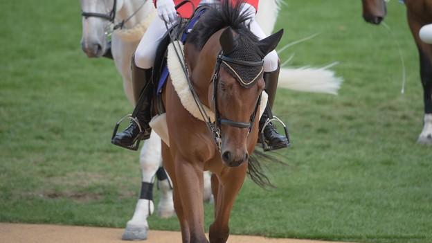 マイネルスケルツィ「戻ったよ~誰かベイさんにニンジン持ってきてあげて~」【140906札幌5R2歳新馬】