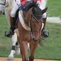 Photos: マイネルスケルツィ「戻ったよ~誰かベイさんにニンジン持ってきてあげて~」【140906札幌5R2歳新馬】