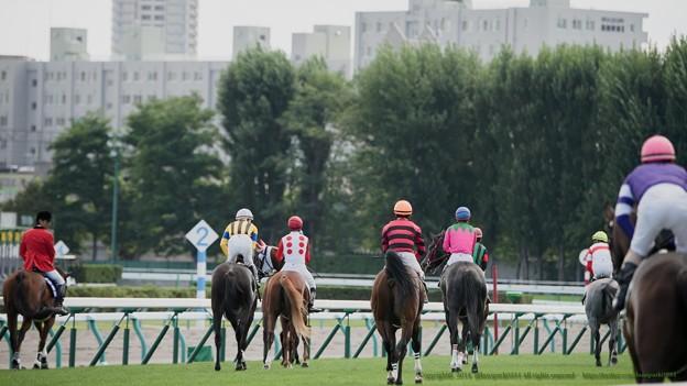 芝1500なので、入場後は一旦4角の方向に向かって~【140906札幌5R2歳新馬】
