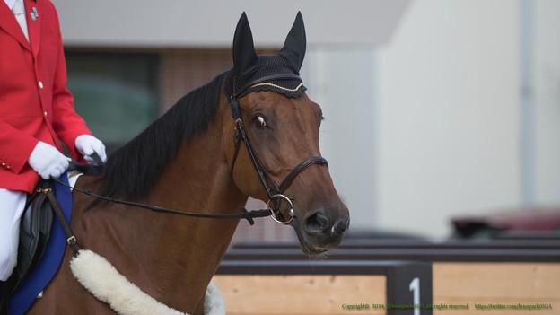 ビューテンプ「ぼくも誘導馬としては新馬同然なんすよ~は?年齢は関係ないんだよ、経験だよ経験!」【140906札幌5R2歳新馬】 #ジロリ馬
