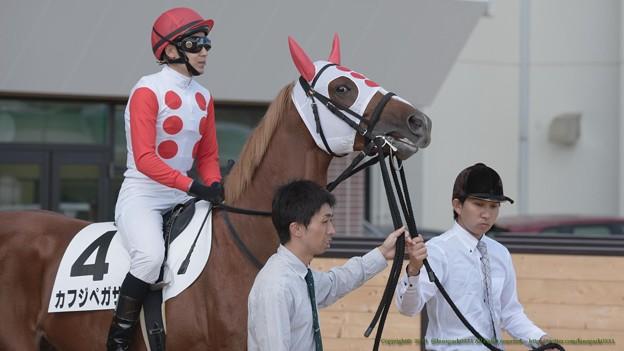 カフジペガサス(田中博)「どう?いい色合いでしょうこのたてがみ~」【140906札幌5R2歳新馬】 #ジロリ馬
