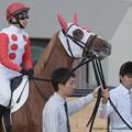 Photos: カフジペガサス(田中博)「どう?いい色合いでしょうこのたてがみ~」【140906札幌5R2歳新馬】 #ジロリ馬