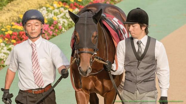 ?ワールドエース「はぁ…今日も一番人気ですか…」 【141012東京11R毎日王冠】