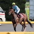 Photos: スピルバーグ「ロサくん、元気だせよ~まあしかししんどいレースだわ」【141012東京11R毎日王冠】