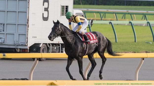 ロサギガンティア「スピルバーグさんには勝てなかった…」【141012東京11R毎日王冠】