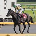 Photos: ロサギガンティア「スピルバーグさんには勝てなかった…」【141012東京11R毎日王冠】