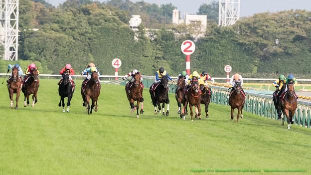 100m、サンレイレーザーまだ逃げる、グランデッツァとディサイファの間からエアソミュールが追撃【141012東京11R毎日王冠】