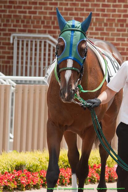 0508_?エキマエ「小田切さんのとこのお馬さんじゃないんですよ~」【130721函館5R】
